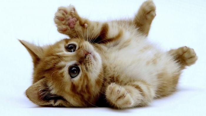Pourquoi les chats ont-ils des moustaches? (ou comment parler de sciences en FLE)