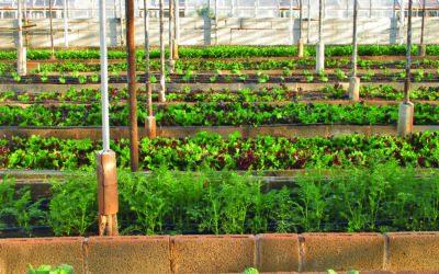 Superlatif et fermes urbaines