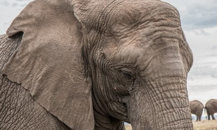 Qui a une mémoire d'éléphant dans la classe ?